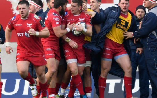 scarlets european champions cup
